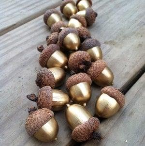 gold painted acorns