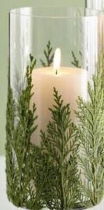 candle-evergreen