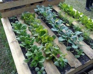 howto make a raised garden bed cheap
