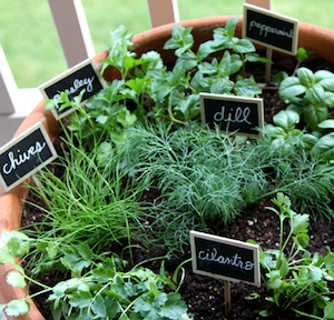 potted diy herb garden ideas one pot herb garden large terra cotta pot chalkboard labels chalk pen