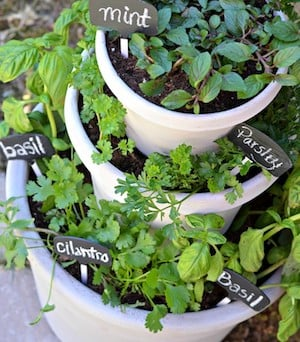 50 cheap and easy diy herb garden ideas prudent penny pincher tiered pots herb garden no source found sisterspd