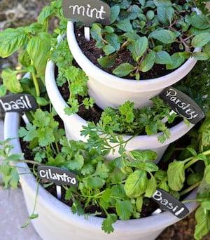 Tiered Pots Herb Garden (no Source Found)