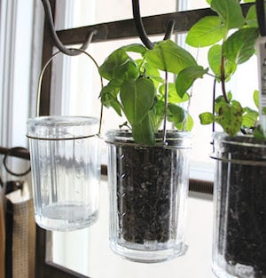 indoor hanging herb garden they sell those jars with handles at dollar tree and you could get a cheap metal rack from dollar tree too and spray paint it - Hanging Herb Garden Ideas