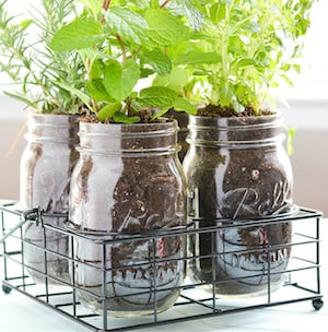 Exceptionnel Mason Jar DIY Herb Garden Pint Size Masons Jars + Vintage Style Mason Jar  Holder