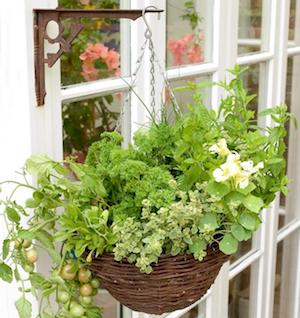 hanging herb and vegetable basket - Hanging Herb Garden Ideas