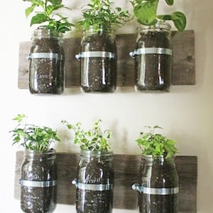 Genial Mason Jar Wall Planter Quart Mason Jars + Hose Clamps + 2 Pieces Of Scrap  Wood + Wood Stain. Indoor Hanging Herb Garden
