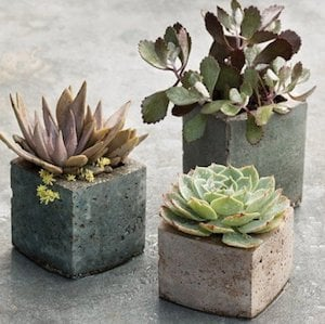 50 Succulent Diy Garden Projects Prudent Penny Pincher