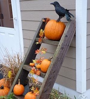 ladder on side of house decorated with pumpkins, leaves and a crow