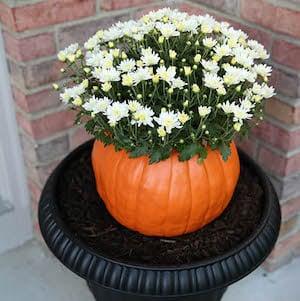 DIY Pumpkin Flower Pot