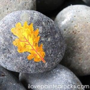 Fall Leaf Rock