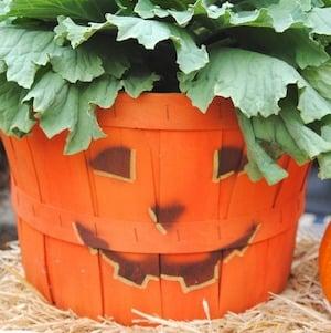 pumpkin basket planter