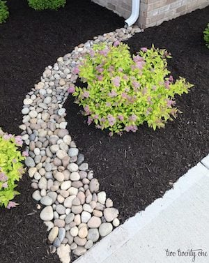 Front yard Downspout Path landscaping