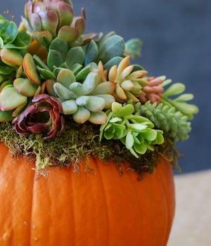 Pumpkin Succulent DIY Fall Centerpiece