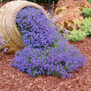 Overflowing Flower Planter