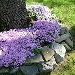 Circular Flower Bed with Rock Border
