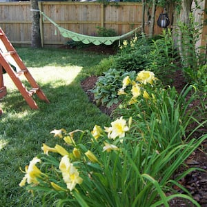 Backyard landscaping idea along fence