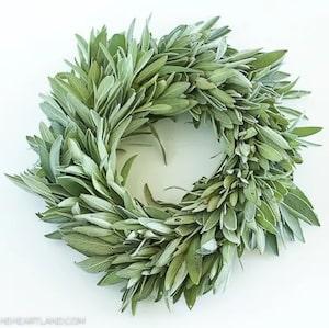 DIY Fresh Sage Wreath for thanksgiving