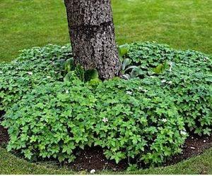 Plants Around a Tree