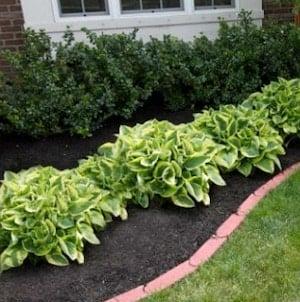 Low Maintenance Landscaping idea along house