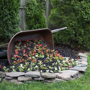 Tipped Wheelbarrow Planter lined with rocks