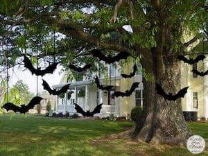 Black Bats hanging from tree